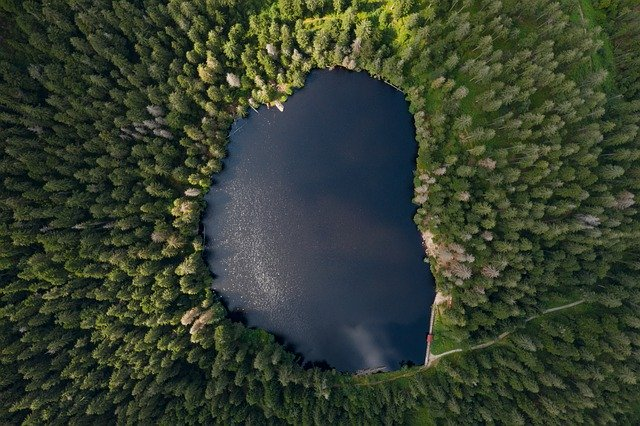 Wald mit See von oben