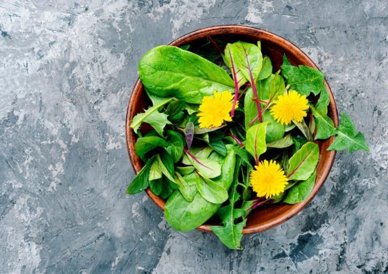Löwenzahn Salat